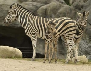 Top-10-Baby-Animals-From-Zoos-of-the-World8