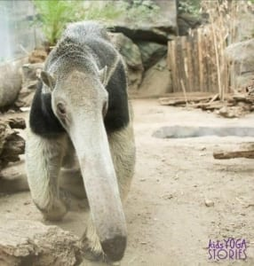 anteater-zoo-animal