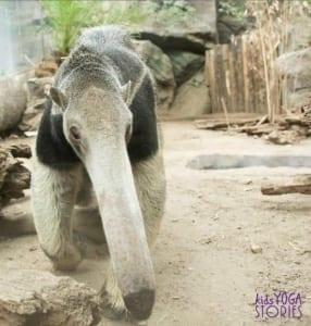 anteater-zoo-animal