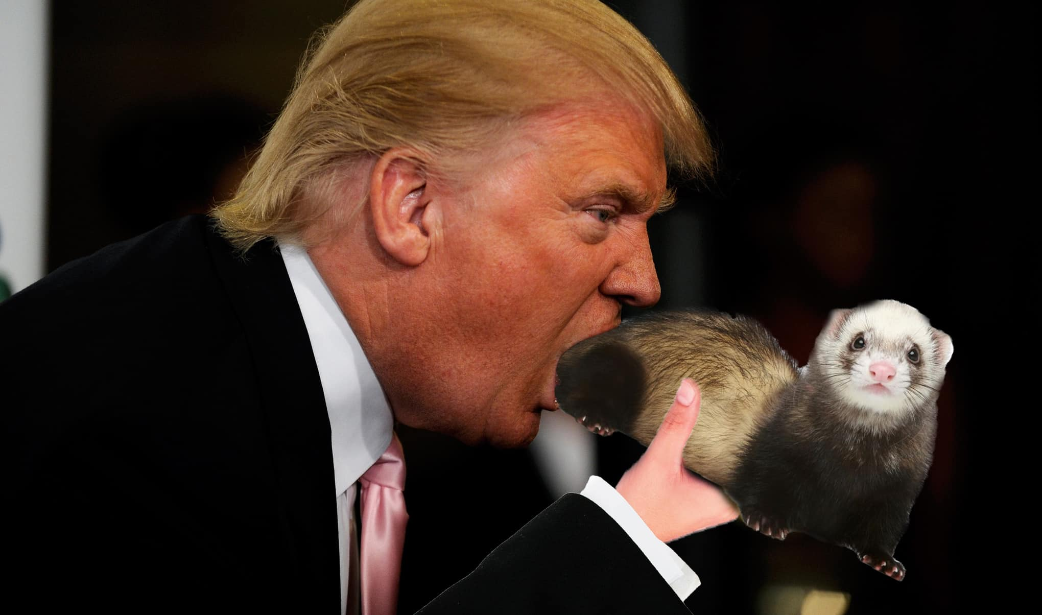 Please Don't Trust This Photo Of Donald Trump Eating An Entire Ferret