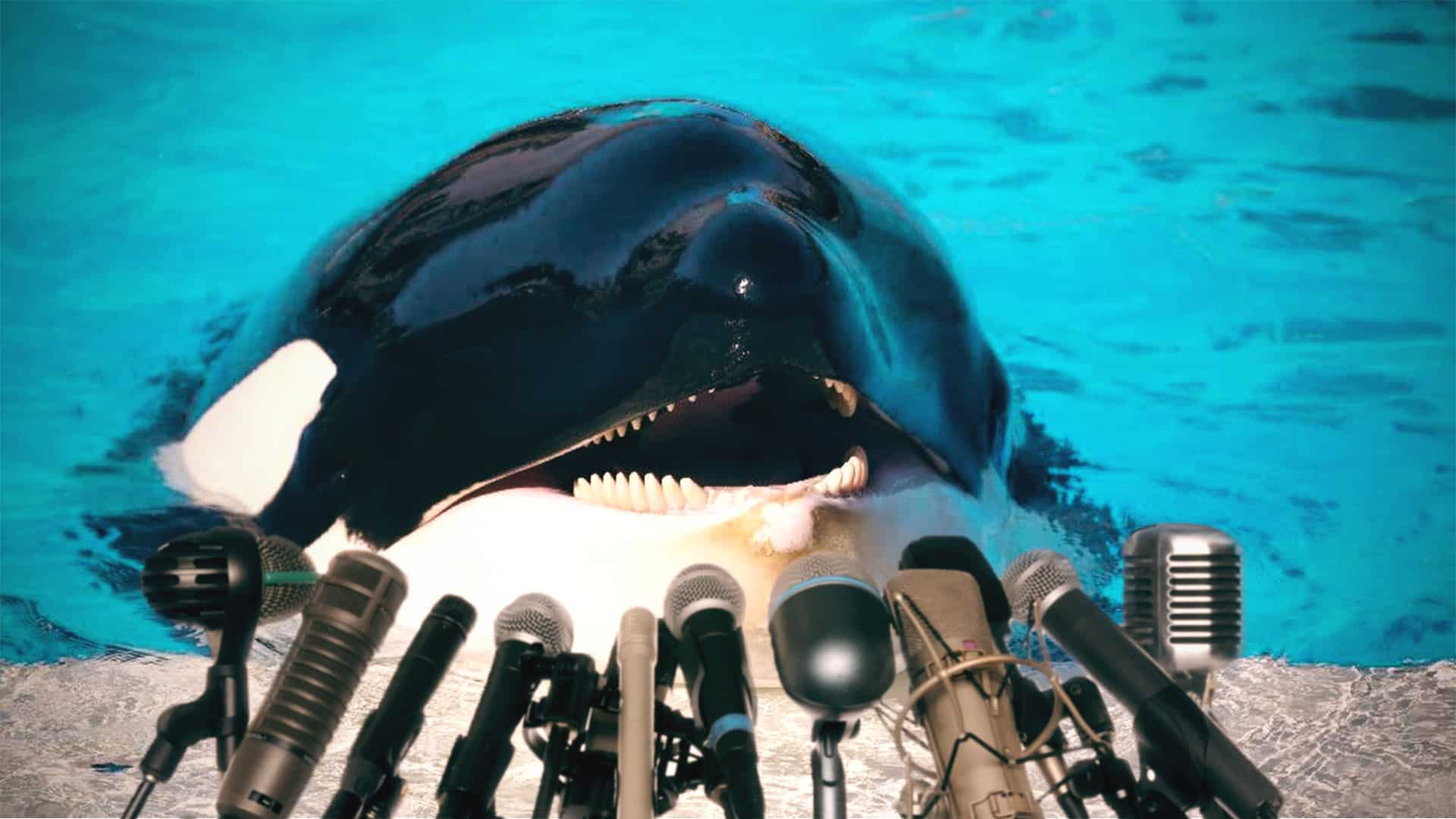 They Taught This Whale To Talk And Now It's Running For President Of The United States