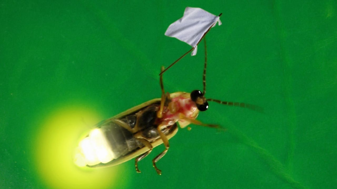 Lightning Bug Crushed While Flashing 'I Come In Peace!'