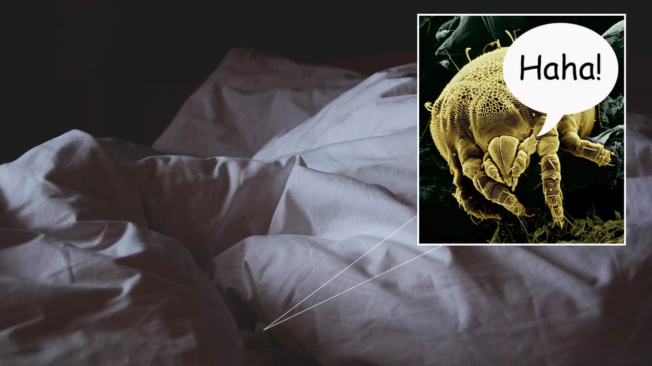Micro-Organisms Discovered In Mattress Can Confirm Woman Is Faking Orgasm