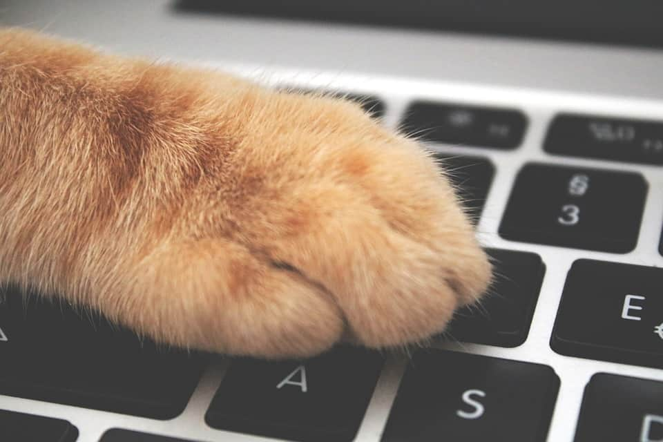 Cat Walks Across Keyboard, Discovers Cold Fusion