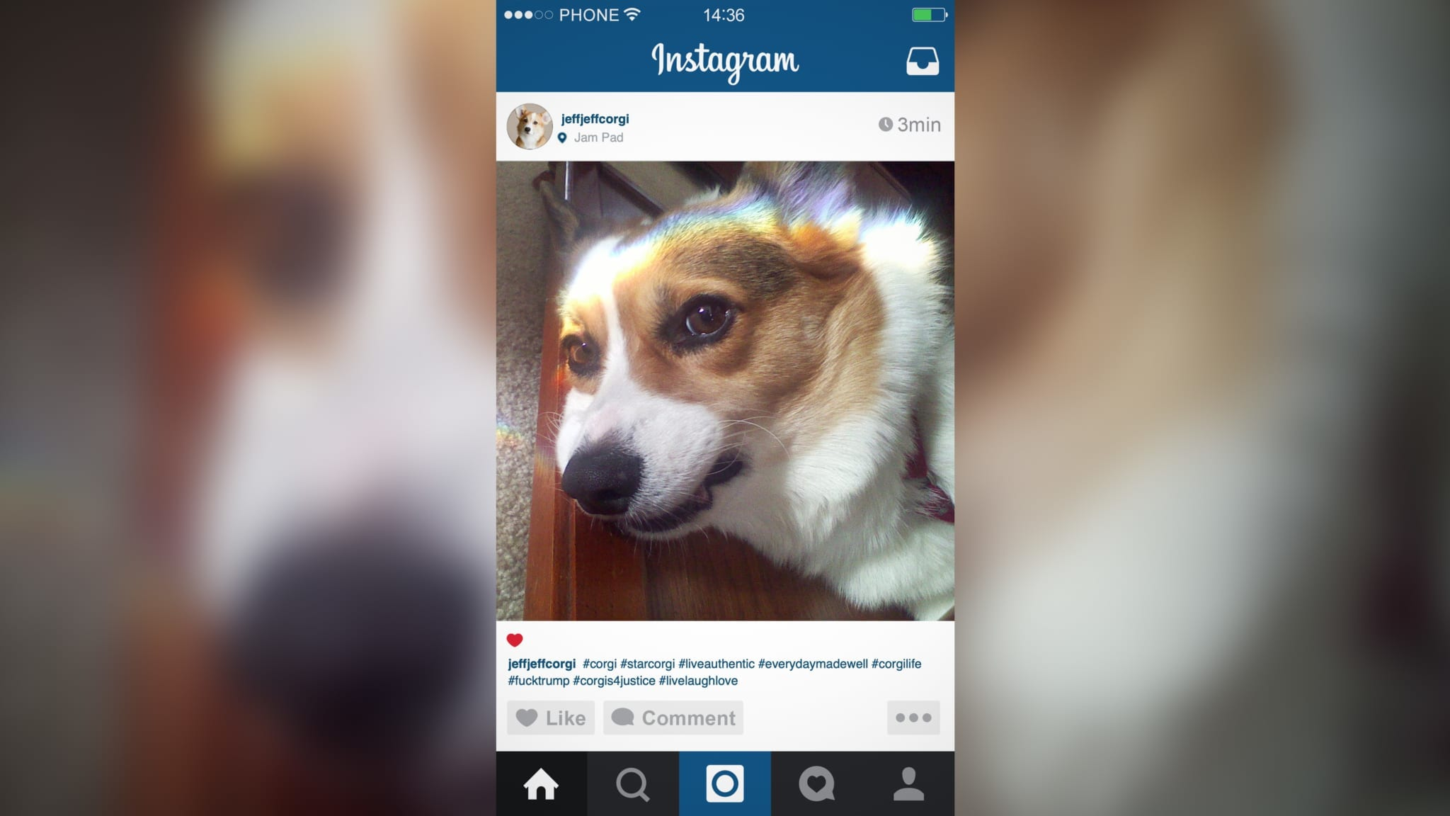 Corgi Instagram Influencer Not Even Grateful For Owner Buying Followers
