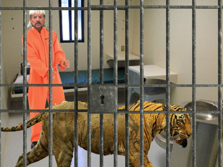 Feces Covered Tiger Smuggled Into Prison, Confiscated From Joe Exotic's Cell