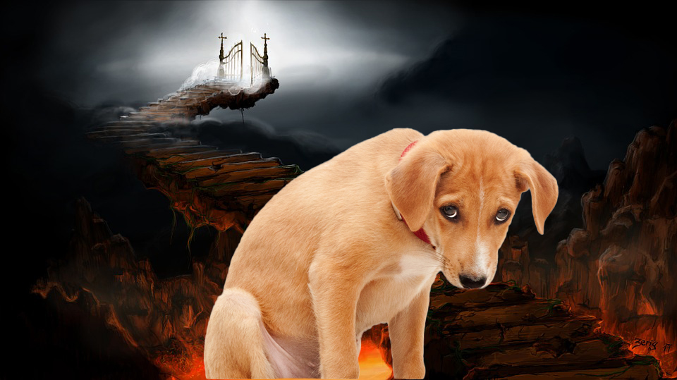 6 Dogs That Did Not Go to Heaven and are Burning in Hell