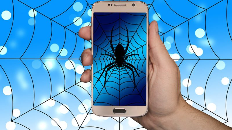Spider Sells Eggs On Dark Web Web